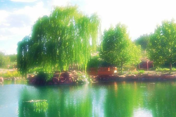 weeping_willow